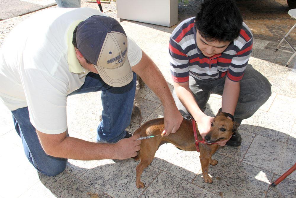 Funcionário da equipe municipal de saúde aplica a vacina em um cão