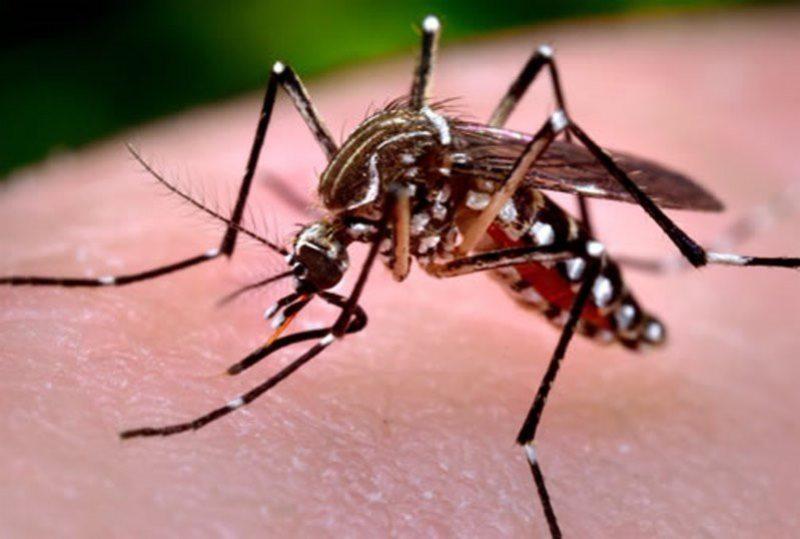 dengue 01 a3314
