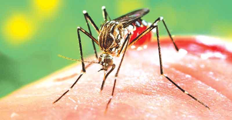 dengue 1 42234