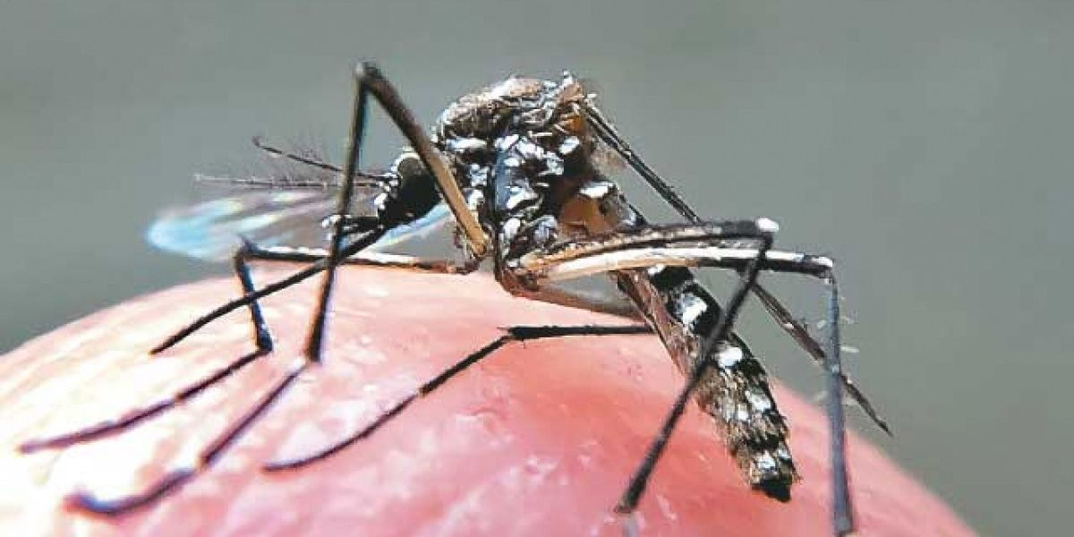dengue 3edd4 3e21a